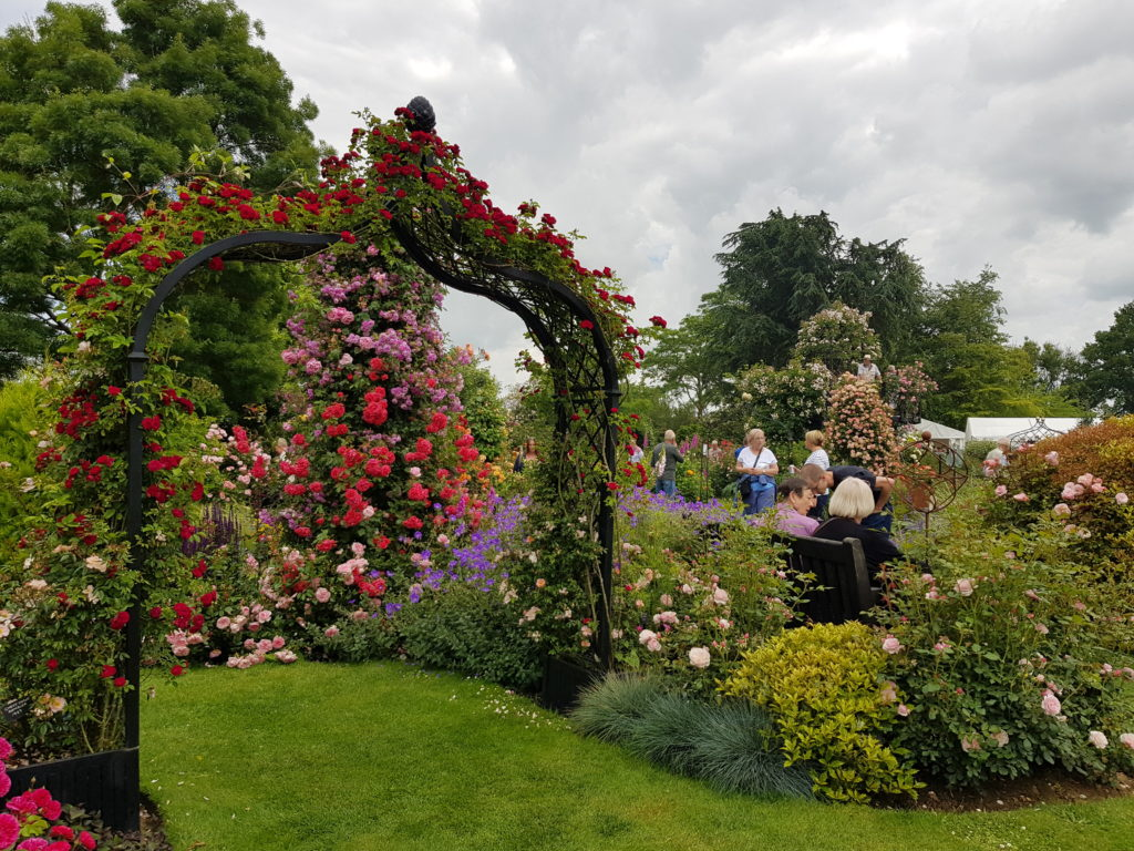 A beautiful rose arch to complement the climbers