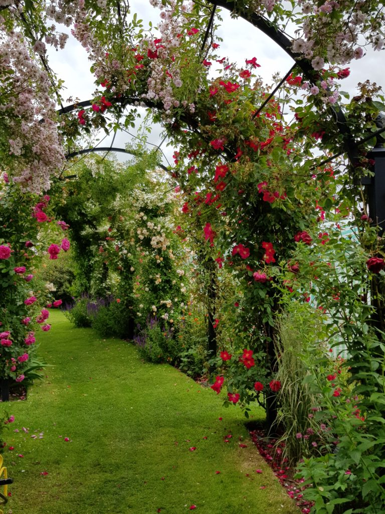 A stunning display of climbing roses