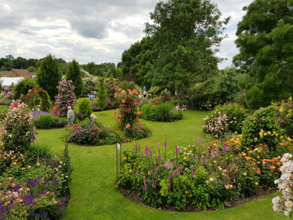 Great view over the island beds at Peter Beales Nursery